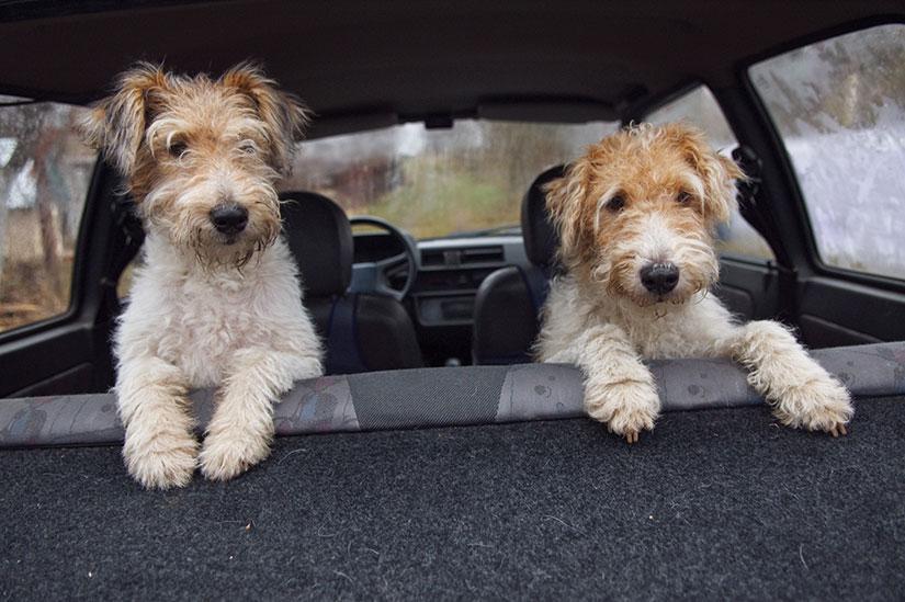 FitDog -tuotteiden käyttövinkit matkustavalle koiralle