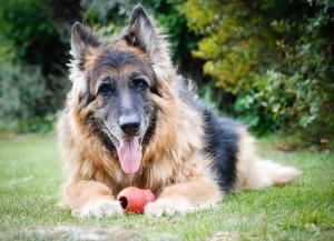 old dog2